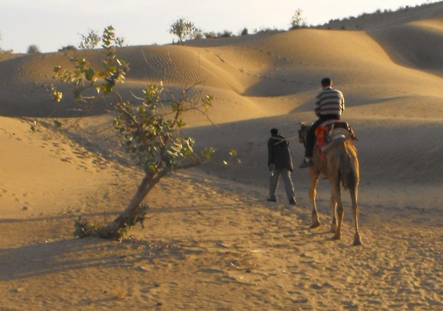 Risultati immagini per cammellata deserto thar